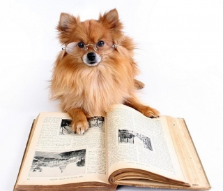 Dog-Pom-Reading-a-Book